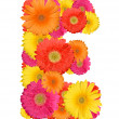 Stock Photo: Alphabet of Gerbera