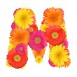 Alphabet of Gerbera - Stock Photo