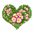 Stock Photo: Flower heart isolated