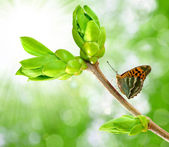 Spring branch with butterfly — Stock Photo