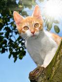 Gato jovem — Fotografia Stock