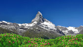 Matterhorn - Swiss Alps — Foto Stock