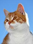 若い猫 — ストック写真