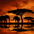 Silhouette two elephants — Stock Photo #8055461