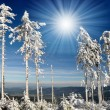 Stock Photo: Winter in national park Sumava
