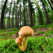 Mushroom in forest — Stock Photo #8059246