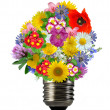 Bulb from flowers - Stock Photo