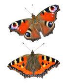 Fjärilar isolerade — Stockfoto