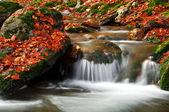 Autumn creek — Stockfoto