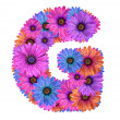 Stock Photo: Alphabet of colorful dewy flowers