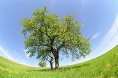 Spring landscape in the national park Sumava - Czech Republic — Stock Photo