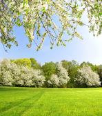 Paisagem de primavera — Foto Stock