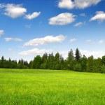 Spring landscape in the national park Sumava — Stock Photo