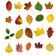 Autumny leaves — Stock Photo #8099185