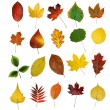 Autumny leaves - Stock Photo