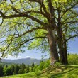 Stock Photo: spring landscape in the national park sumava