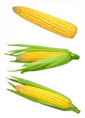 Corn isolated — Foto de Stock