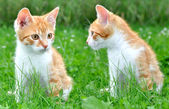 Two young cats — Stock Photo