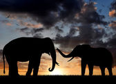 Elephant in the sunset — Stock Photo
