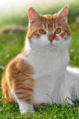 Young cat — Stock Photo