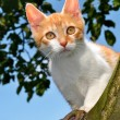 Cat  on  tree - Stock Photo