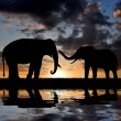 Two elephants — Stock Photo #8123730
