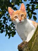 Cat on tree — Stock Photo