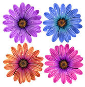 Colorful dewy flowers — Stock Photo