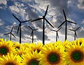 Vindkraftverk med solros — Stockfoto