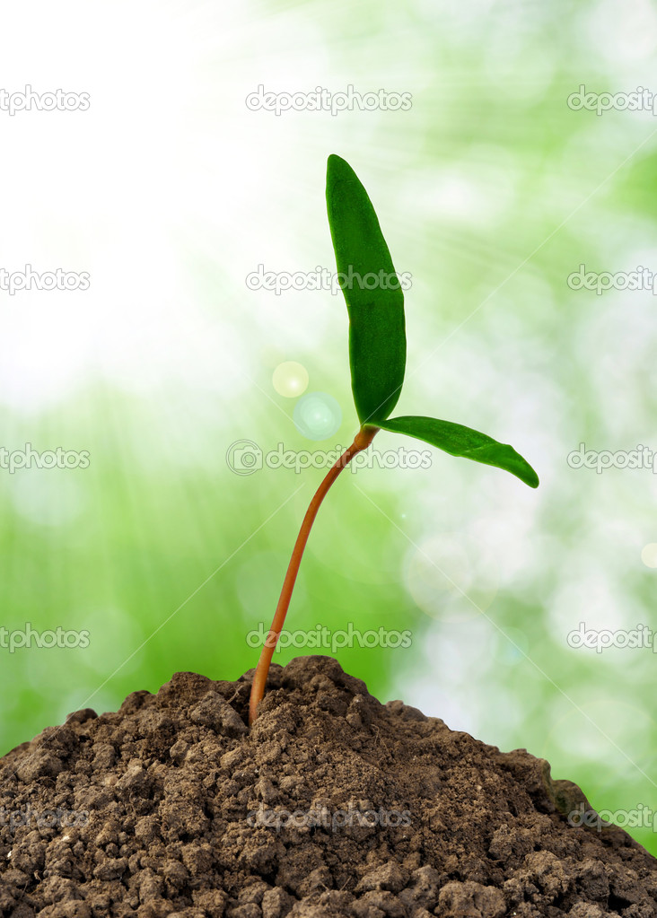 Growing green plant on green background — Stock Photo #8123582