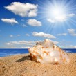 Shell on beach — Stock Photo #8179041