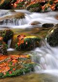 Autumn creek in the national park Sumava — Stock Photo