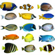 Tropical reef fish — Stock Photo #8222210