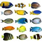 Tropical reef fish — Stock Photo