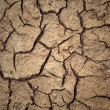 Cracked soil — Stock Photo #8238282
