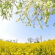 Rapeseed field — Stock Photo #8857704