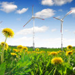 Wind turbines on dandelion fields — Stock Photo