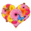 Flower heart isolated -  