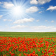 Red poppy field — Stock Photo #8857814