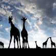 Herd of giraffes — Stock Photo #8857935