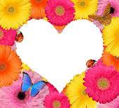 孤立的花卉心 — 图库照片