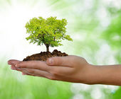 Growing tree in hand — Stock Photo