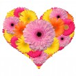 Flower heart — Stock Photo