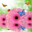 Gerberas with butterflies and ladybug — Stock Photo