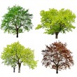 Tree isolated — Stock Photo #9099866