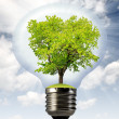Stock Photo: Green tree growing in a bulb