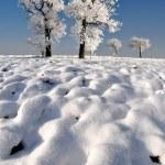 Frozen tree — Stock Photo