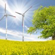 Stock Photo: Rapeseed field with wind turbine
