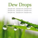 Постер, плакат: Dew drops