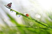 Rocío con mariquita y la mariposa — Foto de Stock